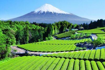 Een woordje over Japanse groene thee